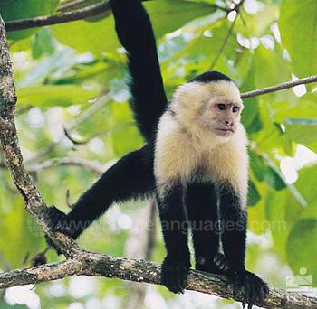 Rain forest monkey