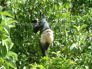 Monkey in nearby forest