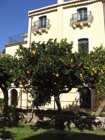 Fruit trees in the school garden