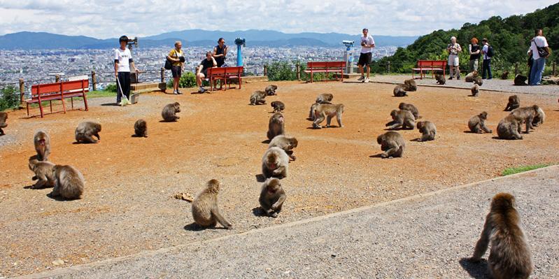 Visiting Iwatayama Monkey Park