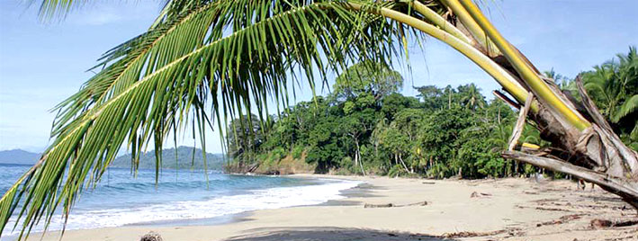 Untouched beach in Manuel Antonio
