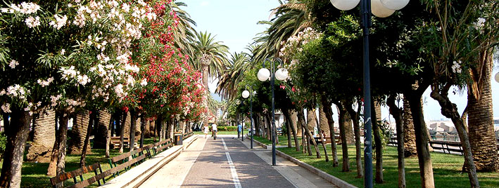 Tree lined street in Salerno