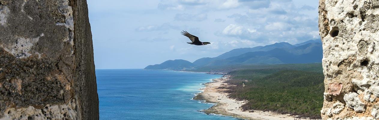 Bird soaring over Santiago de Cuba